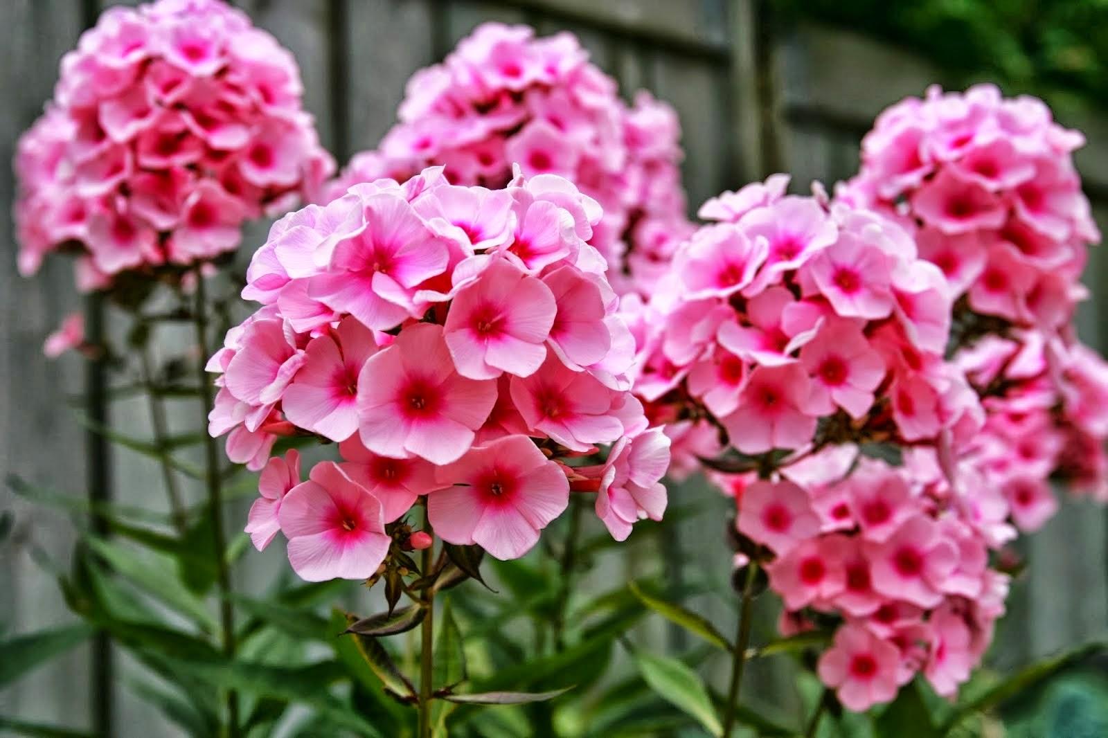 Bunga cantik tapi mematikan merlynstefany